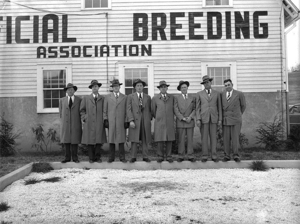 White Wife Breeding Team